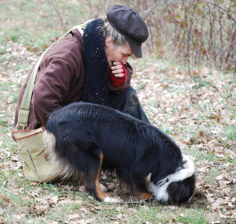Acheter un chien truffier dressé